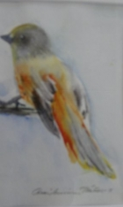 Kuukkeli. Akvarelli. Auli Muurinen-Kitula